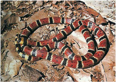 5 types of venomous snakes in Yucatan.